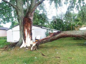 Tree split at trunk.